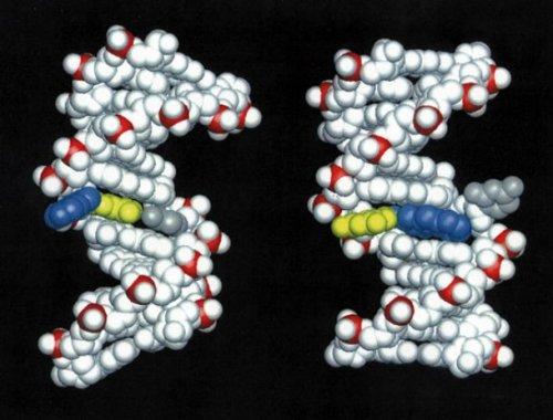 Топ-25: Интересные факты про ДНК, которые вы могли не знать