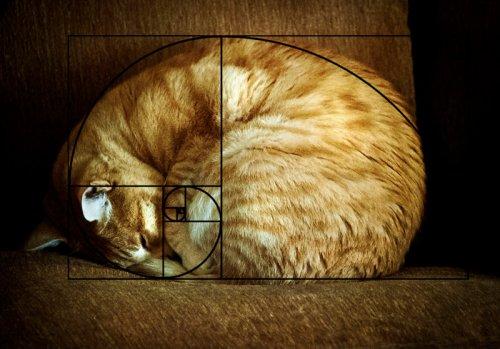 Идеальные кошки, открывшие последовательность Фибоначчи (20 фото)