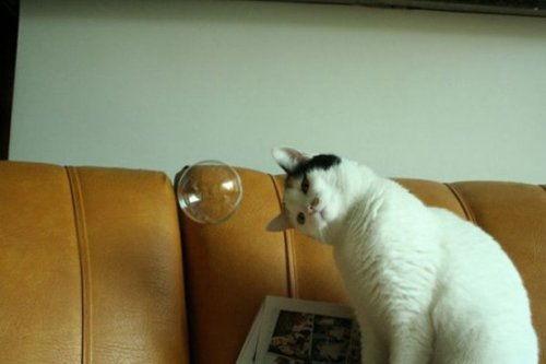 Прикольные картинки с кошками (22 шт)