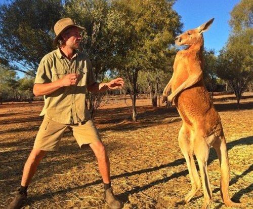 Мускулистый кенгуру по кличке Роджер (9 фото)