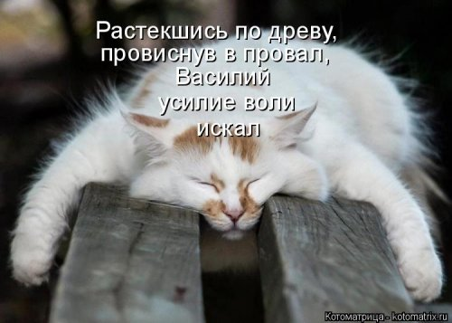Новая котоматрица для хорошего настроения (37 фото)