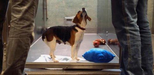 Подарите бездомным животным шанс на новую жизнь