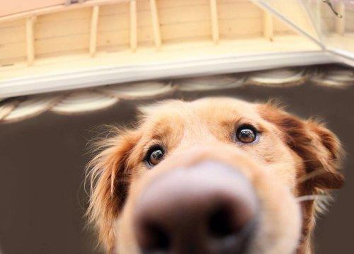 Любопытные носы, которым интересно, чем вы заняты (29 фото)