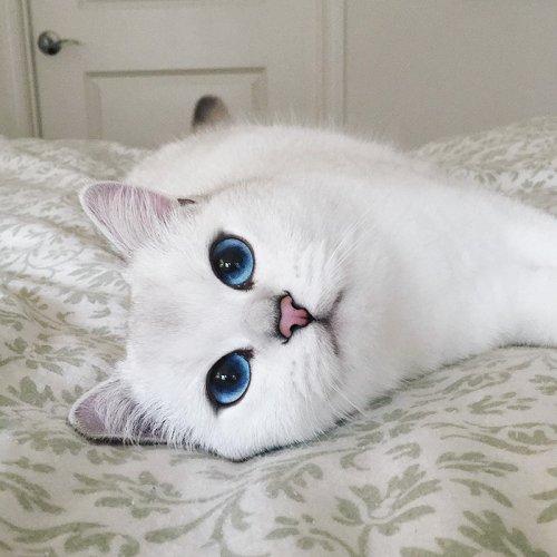Белоснежный кот с самыми очаровательными глазами (17 фото)