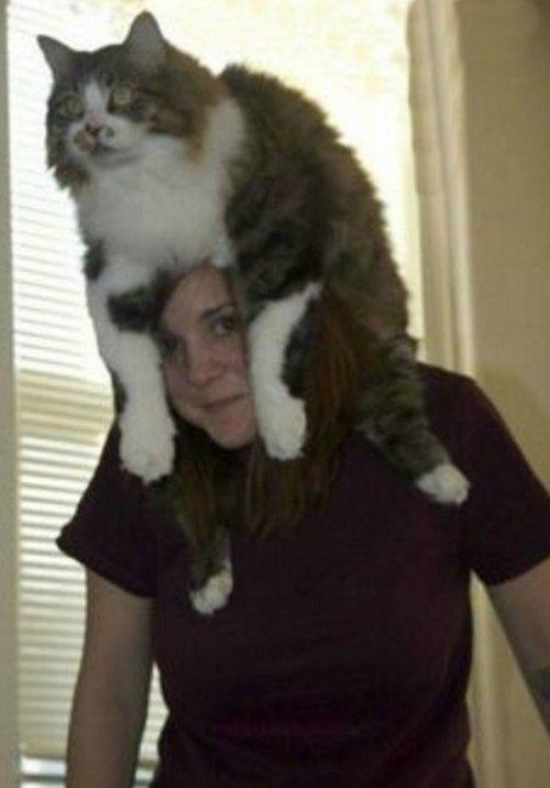 Кошки, сумевшие взобраться на голову хозяину (10 фото)