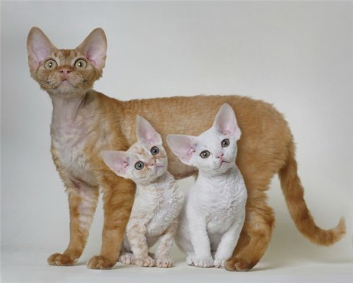 Такие разные и очаровательные котики и кошечки (24 фото)