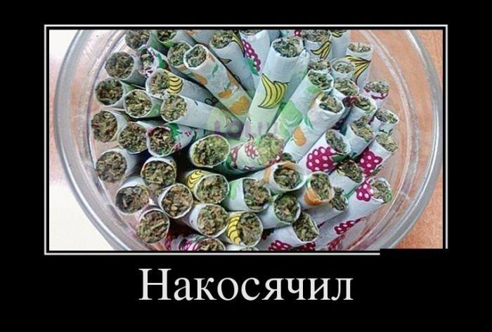http://www.bugaga.ru/uploads/posts/2016-03/1456904655_demki-16.jpg
