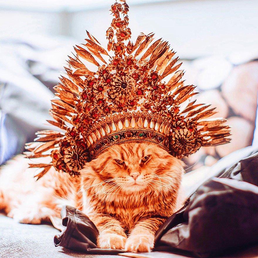 Днем рождения, прикольные картинки с короной