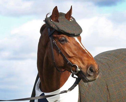 Кто там? — Кто, кто? Конь в… костюме-тройке! (4 фото + видео)