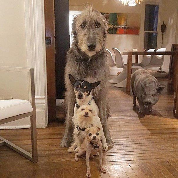 Как найти собаке дом