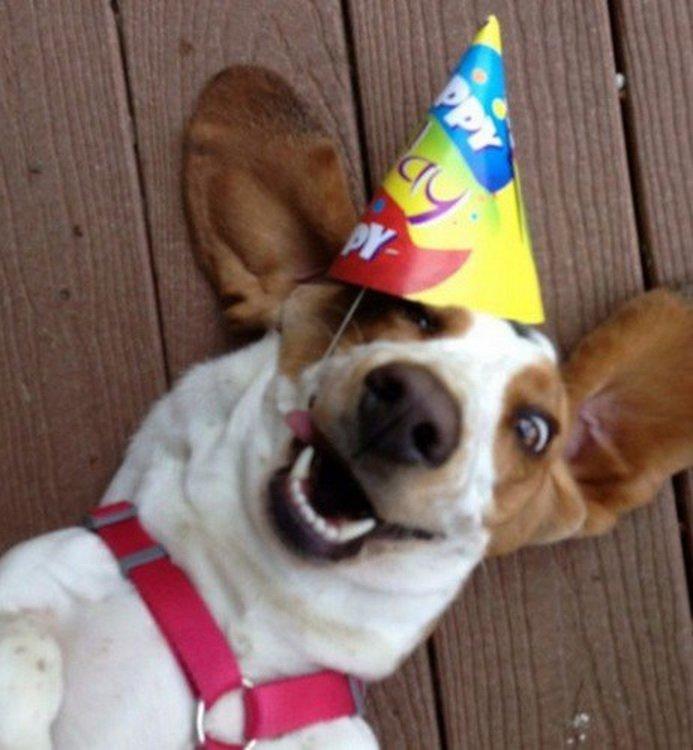 Открытка с днем рождения с животными прикольными 80