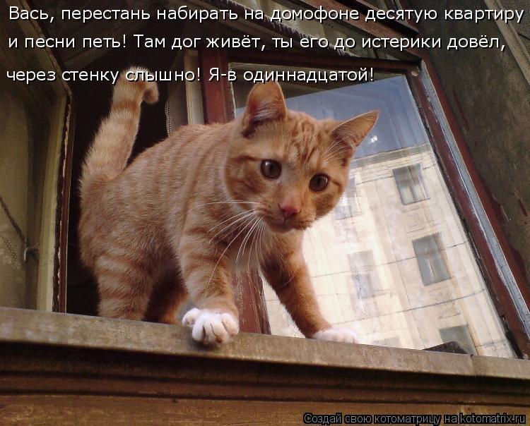 фото кошки с надписью сама по себе вчера новый