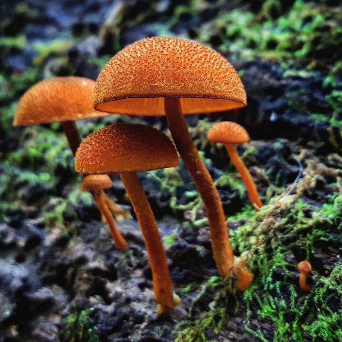 фото всех грибов мира дорогой спортивный страховой
