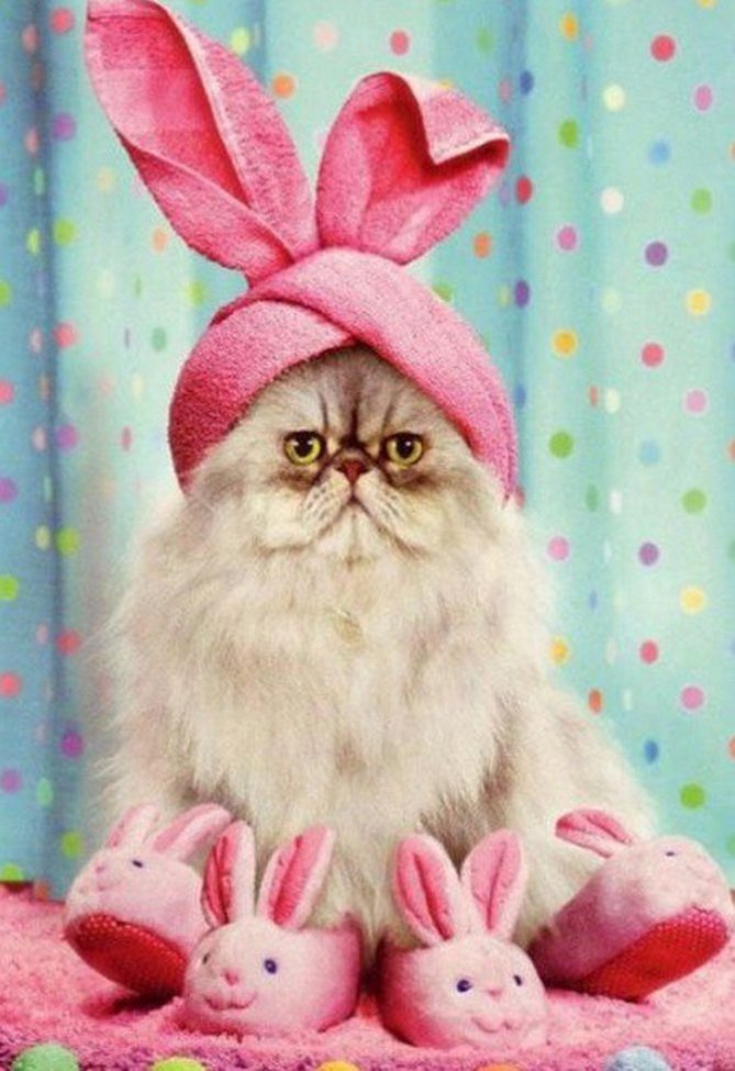Картинки кролик в шапке демонтировать