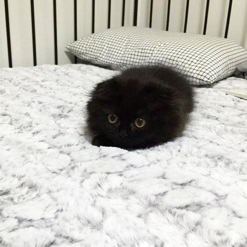 Очаровательный кот Джимо с большими глазами (16 фото)