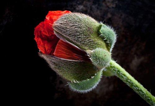 Работы победителей фотоконкурса International Garden Photographer of the Year (19 фото)