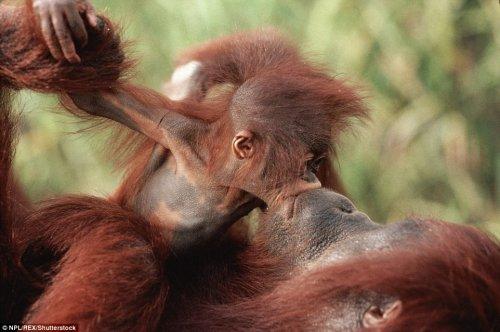 Малыши и мамы из мира животных (16 фото)
