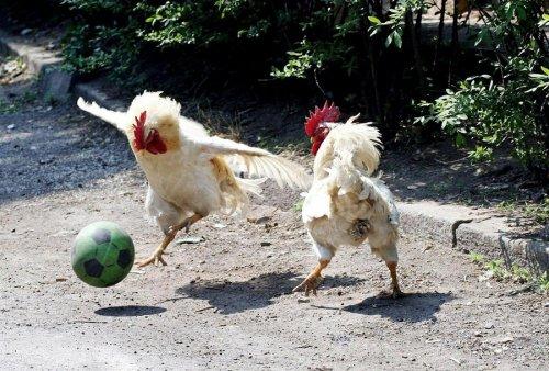 Животные, которые вдохновят вас на занятия спортом (15 фото)