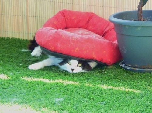 Подарки для кошек и непостижимая кошачья логика (25 фото)