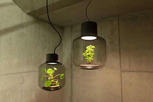 Лампы для выращивания растений, не требующие человеческого ухода (7 фото)