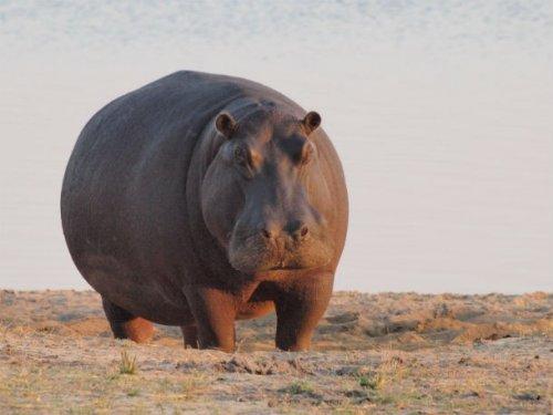 Топ-25: Животные, которые гораздо больше, чем вы предполагаете