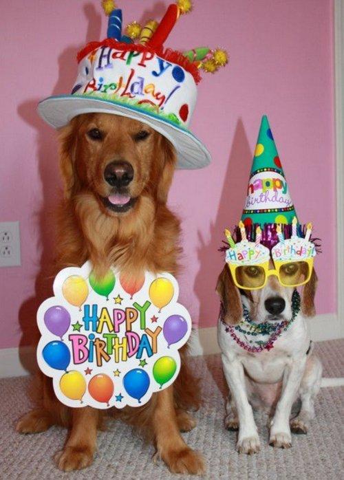 Открытки 10 лет собаке, открытки