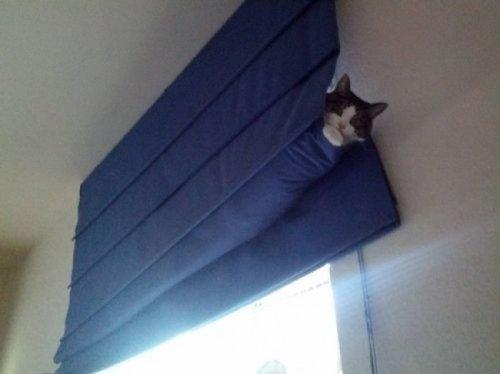 Самые неожиданные места, в которых отдыхают кошки (17 фото)
