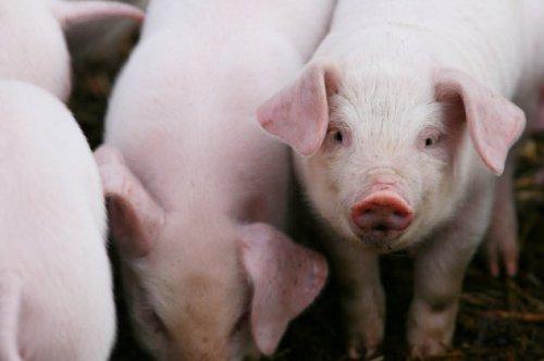"""Топ-10: Широко распространённые """"факты"""" про животных, которые являются абсолютно ошибочными"""
