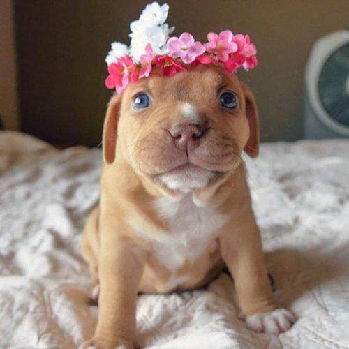 Очаровательные щенки в честь Национального дня щенка (35 фото)
