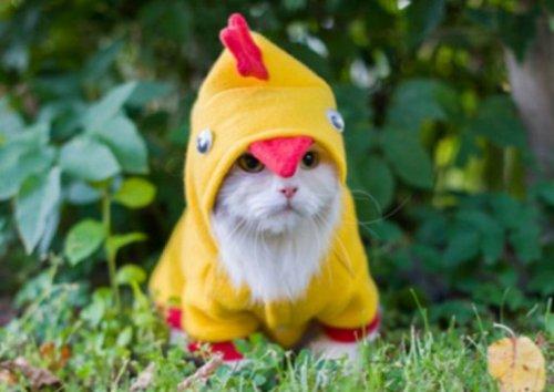 Забавные кошки в пасхальных костюмах (10 фото)