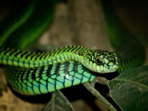 Топ-25: Самые ядовитые змеи на планете