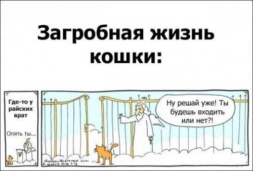 Новые комиксы и карикатуры (19 шт)