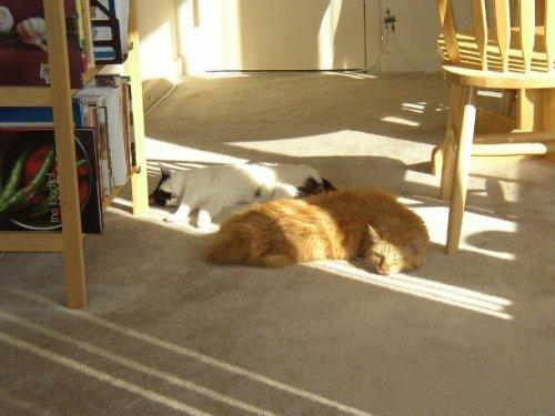 Топ-25: Признаки завоевания мира кошками (владельцы собак, берегитесь!)