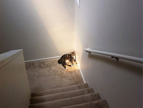 Кошки, которые умеют наслаждаться солнечными днями (29 фото)