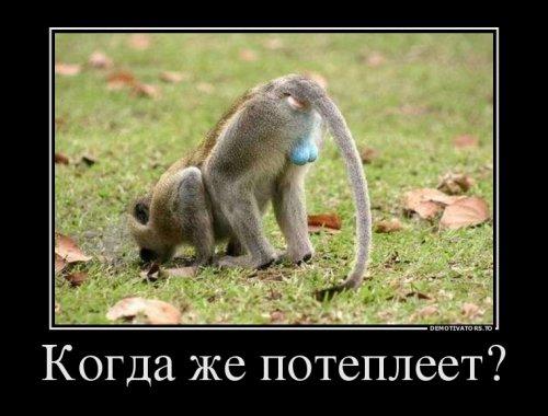 Демотиваторы-приколы (21 фото)