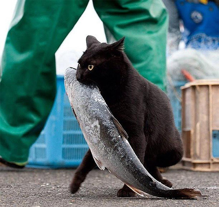 где ловят котов