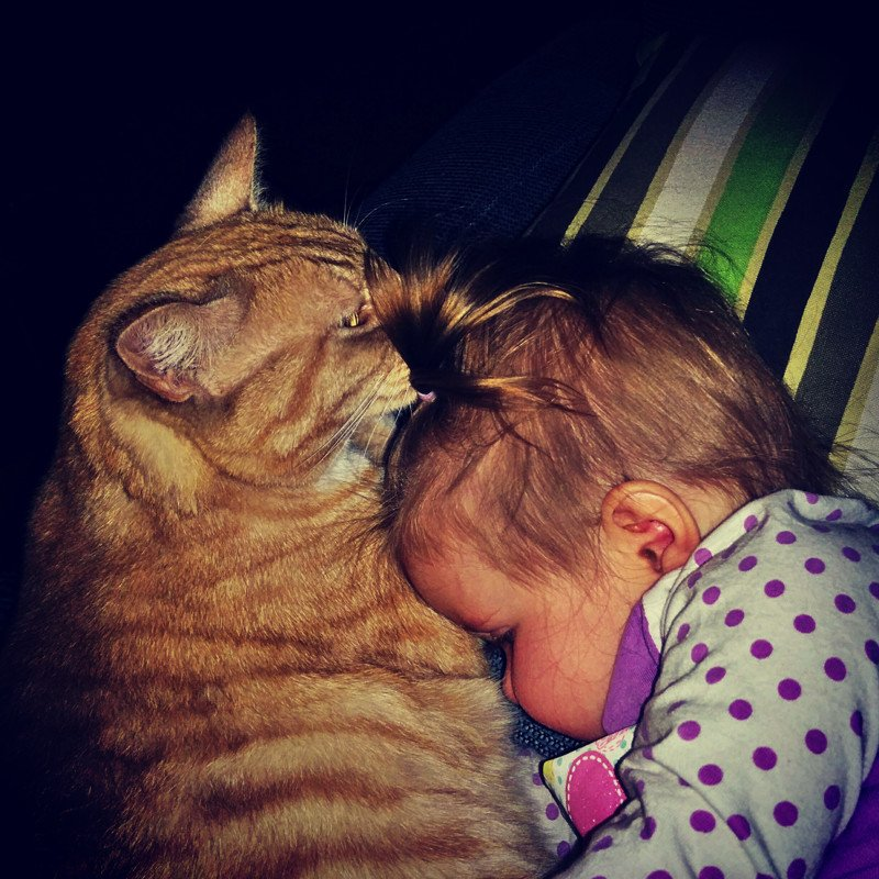 прикольные картинки кошек с детьми имеете навыки