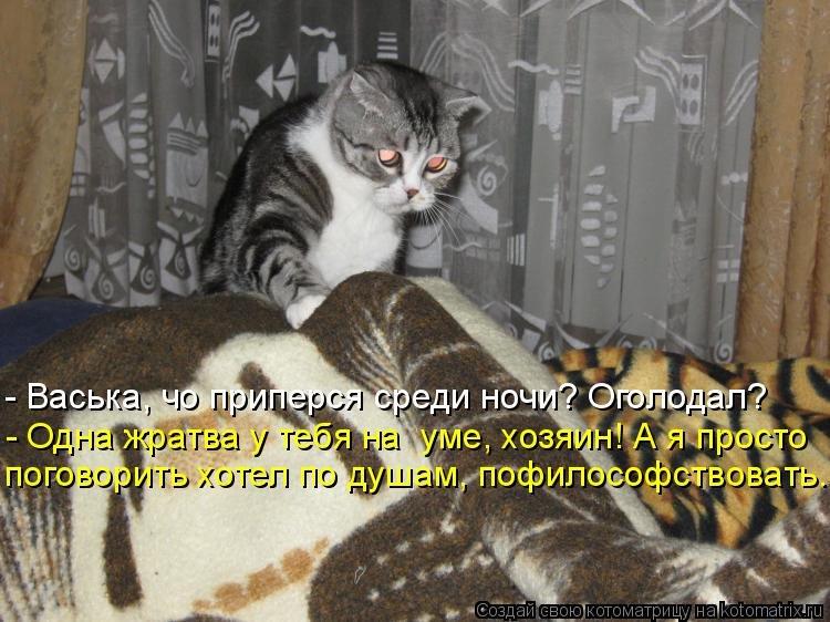 Кот на новом месте приметы
