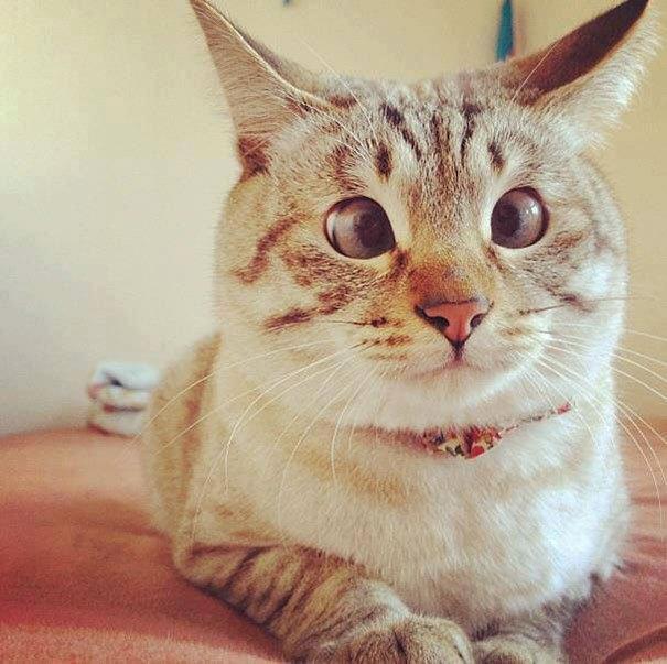 Косой кот фото приколы