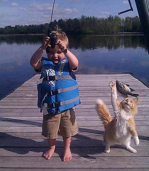 Кошки из криминального мира (15 фото)