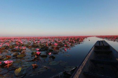 Розовое озеро в Таиланде (8 фото)