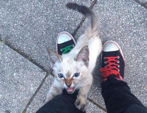Бездомный котёнок сам выбрал себе нового хозяина (8 фото)