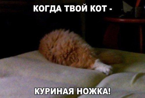 Анекдоты-новинки (17 шт)