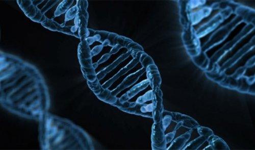 Топ-25: Факты про ДНК, благодаря которым вы узнаете о себе немного больше