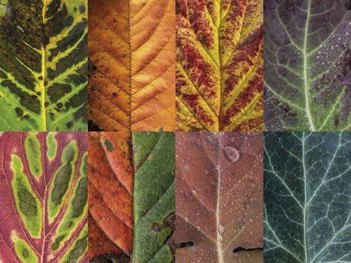 Вся красота и разнообразие листьев в фотоколлекции Sepia (8 фото)