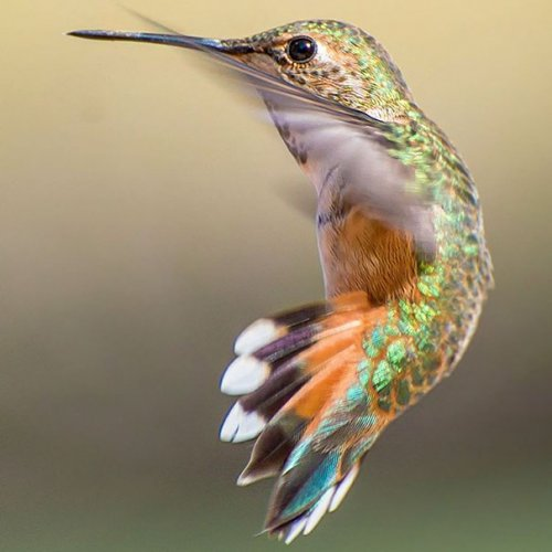 Крошечная красота колибри в Instagram певицы Трэйси Джонсон (15 фото)