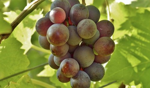 Топ-25: Сладкие факты про фрукты, которые вы не знали