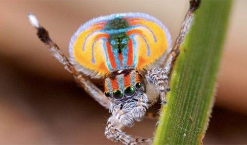 Топ-25: Причины, по которым пауки чрезвычайно ужасающи, но безумно интересны