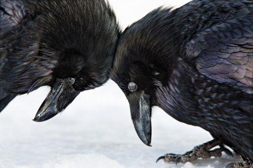 Лучшие фотографии конкурса Audubon Photography Awards 2016 (9 фото)