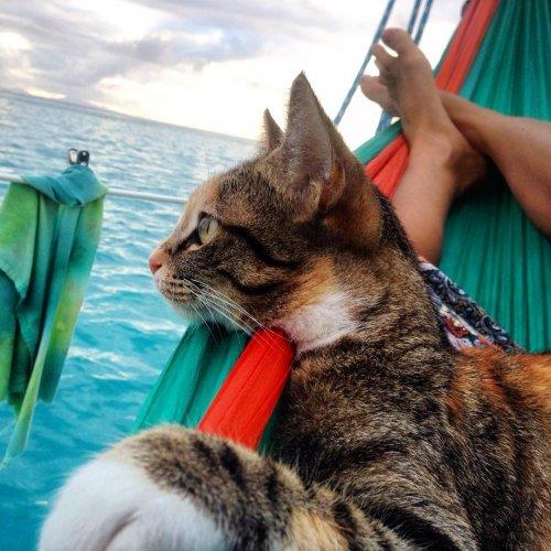 Девушка отправилась в морское путешествие со своей кошкой (11 фото)
